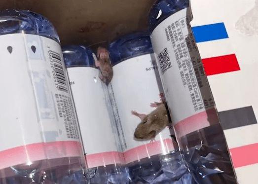 杭州女子网购矿泉水出现2只活老鼠      消费者如何维护自己的合法权益